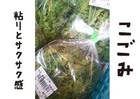 川べりの山菜 こごみ