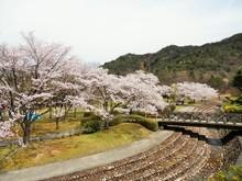 道の駅近隣 桜の名所(2)日時計の丘公園