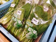 10月 葉物野菜