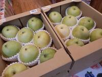 鳥取県産「梨」入荷しました